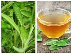 Salvia, Natural Remedies, Alcoholic Drinks, Flora, Fruit, Health, Medicine, Therapy, Remedies