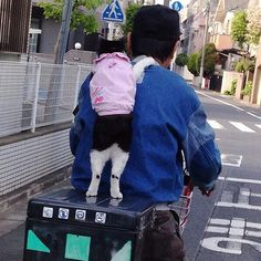 .OMG the cuteness. Can't stand it!  おじさんが猫のリードをはずして荷台に乗せて 「つかまって」と言った。 そうしたら、猫がおじさんの肩に手をのせたんだよ〜! : カルチェラタン .ღ.