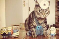 Cansei de ser gato, virei minion!Fonte: Cansei de ser gato