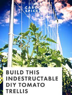 18 DIY Tomato Cage And Stake Ideas | Balcony Garden Web