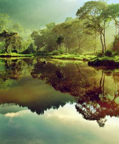 scenery, landscapes, nature, water, forests, trees