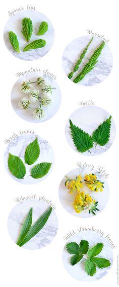 Homemade herbal tea - Learn how to pick, dry and make your own homemade herbal tea. #tea  www.sprinkleofcinnamon.com