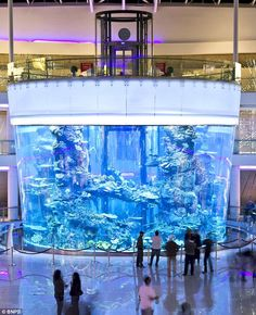 World's biggest cone-shaped fish tank in Casablanca's Morocco Mall.