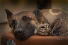 Manchmal kann ich nachts nicht schlafen und dann schaue ich neben mich. Und wie der Mond, der heute Nacht durch mein Fenster scheint, werde ich dich sicher ins Morgenlicht bringen. --------- And sometimes I cannot sleep at Night and I Look next to me. And like the same Moon shining theough my Window here tonight, I will safely bring you through the Morning light ------ #ingoundpoldi #animal #animals #animalsofinstagram #friends #friend #friendship #owl #owls #dogs #dog
