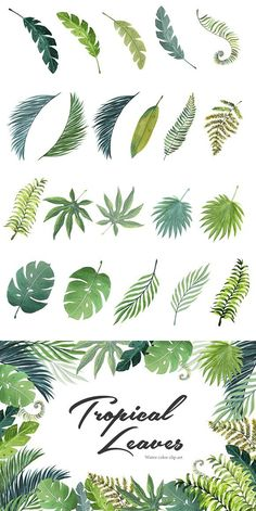 Welcome again with ''Watercolor Tropical Leaves Collection'', a colorfull Hand Painted Watercolor Design Set. Watercolor Plants, Watercolor Leaves, Watercolor Background, Watercolor Paintings, Art Tropical, Tropical Leaves, Tropical Design, Leaf Drawing, Plant Drawing