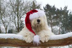 Almost Christmas by dewollewei, via Flickr