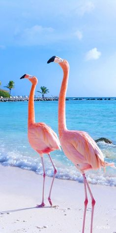 Best places to travel for summer Tier Wallpaper, Flamingo Wallpaper, Ocean Wallpaper, Summer Wallpaper, Animal Wallpaper, Cute Wallpaper Backgrounds, Pretty Wallpapers, Flamingo Pictures, Beautiful Nature Wallpaper