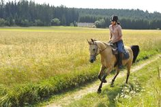 Urlaub am Reiterhof in Niederösterreich   http://www.urlaubambauernhof.at/bundesverband/niederoesterreich-pzv/portal-startseite.html?L=2