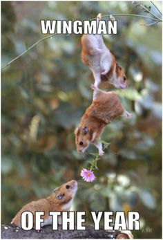 Everybody needs a good wing man, even gerbils! God bless all the good wing men out there!!  LHDC sends our love to you my friend!!!