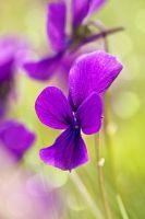 Colors and feelings of Spring by Amersill