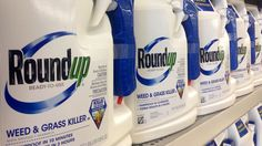 """Glyphosate--an herbicide pioneered by Monsanto but now off patent--has emerged as a proxy for critics of crop biotechnology and intensive agriculture. They've latched on to a designation by a World Health Organization sub-group, the International Agency for Cancer Research (IARC), that glyphosate is a hazard--""""probably carcinogenic"""" it concluded. What does that mean--to the public and regulators?"""