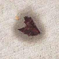 Leaf with a burn