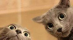 Gatos Chistosos 2016, Gatos jugando con perros, divertido :) - YouTube