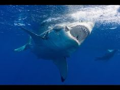 Great White Shark Dies After Just Three Days in Aquarium | Blog | peta2.com