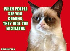 grumpy cat, christmas mistletoe, angry cat, dumpaday - Dump A Day Grumpy Cat Humor, Cat Memes, Funny Memes, Hilarious, Grumpy Kitty, Kitty Kitty, Funny Quotes, Grumpy Cat Christmas, Christmas Humor