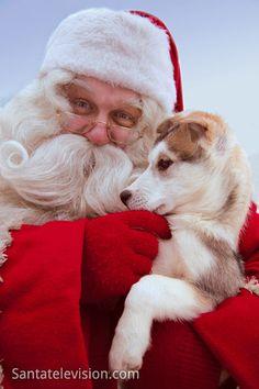 Joulupukki ja husky-koira