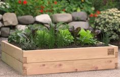 Container Tomato Gardening Raised Garden Bed Kits - by MinifarmBox makes organic container gardening easy Kitchen Garden Plants, Backyard Vegetable Gardens, Vegetable Garden Design, Potager Garden, Hillside Garden, Organic Container Gardening, Container Gardening Vegetables, Cedar Raised Garden Beds, Raised Beds