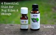 4 Essential Oils for Bites and Stings. These work great on bee and wasp stings and mosquito bites. - 4 Essential Oils for Bites and Stings. These work great on bee and wasp stings and mosquito bites. Essential Oil Deodorant, Essential Oils For Skin, Essential Oil Uses, Holistic Remedies, Herbal Remedies, Natural Remedies, Bee And Wasp Stings, Ant Bites, Bites And Stings