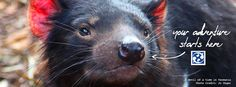 Facebook Timeline Cover Photo @ www.facebook.com/GlobalMedicalStaffing  Your adventure starts here in Tasmania. #locumtenens #Tasmania #TasmanianDevil