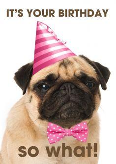 Grumpy dog mopshond verjaardagskaart (@Karen van Gerner Fotografie)