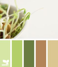 natuur tinten, share the colors