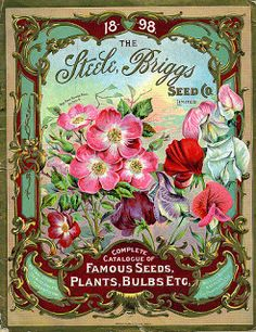 1898 Steele, Briggs Seed Co. catalog cover
