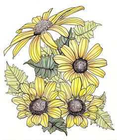 line drawing - flowers - yellow daisies and leaves