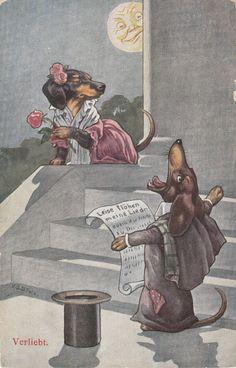Romeo & Juliet - Dachshund Style Male Dog Seranades His Love Both Formally Dressed Antique Postcard Vintage Dachshund, Mini Dachshund, Dachshund Puppies, Weenie Dogs, Vintage Dog, Daschund, Dapple Dachshund, Chihuahua Dogs, Scottish Terrier