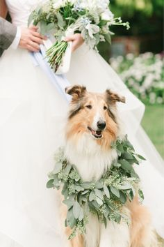 Beautiful wedding dog adorned with a greenery garland. #wedding #pup