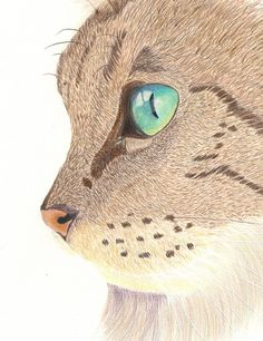 Colour pencil fine lines technique Crazy Cats, Crazy Cat Lady, Thread Painting, Warrior Cats, Cat Drawing, Animal Drawings, Cat Art, Art Tutorials, Art Photography