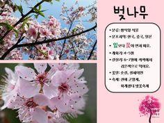 봄 활동자료 봄에 피는 꽃 PPT : 네이버 블로그 Letter Board, Lettering, Blog, Korea, Drawing Letters, Blogging, Korean, Brush Lettering