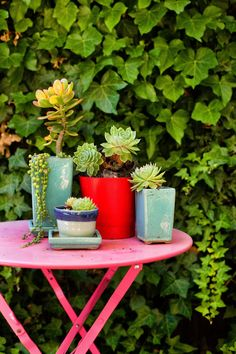 Foolproof Ways to Keep Your Succulents Alive and Thriving