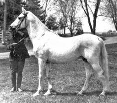 *Abbeian 1889 Gr. s. an Ubayyan Dahra imported by Homer Davenport.