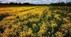 Желтый мир