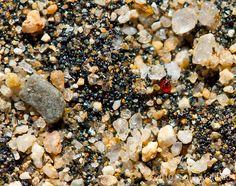 sand ruby