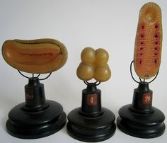 German Ziegler's Wax Cell Studies Leipzig. Mad Science, Science And Nature, Thinking In Pictures, Cabinet Of Curiosities, Geek Tech, Vintage Medical, Medical Illustration, Medical History, Change Is Good