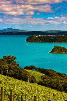 Te Whau Vineyard, Waiheke Island, Hauraki Gulf, near Auckland, New Zealand. I think my honey has run out of money, so I'll just look at the picture for a while:) hehe.