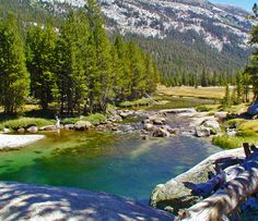 Lyell Creek, located near tuolumne meadows in the high county of Yosemite, is a frequent walked trail.
