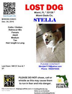 Lost Dog - Collie - Miami, FL, United States