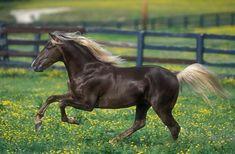 horses Kentucky - Buscar con Google