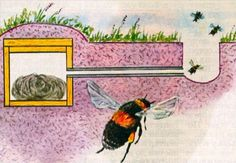 Bumble bee house - bumble bee hives (3)