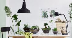 Découvrez toutes nos idées DIY pour réaliser un jardin d'intérieur chez soi. Terrariums, suspensions, murs végétaux, cache-pots, … redoublez de créativité pour inviter les plantes dans votre déco!