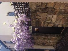 Wisteria in Surry Hills Sydney
