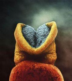 El cerebro comienza a desarrollarse en el embrión