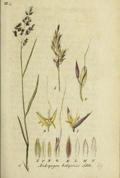https://flic.kr/p/kWjYqs | n124_w1150 | Deutschlands flora in abbildungen nach der natur /. Nurnberg :Gedruckt auf kosten des verfassers,1798-[1862]. biodiversitylibrary.org/page/43631803                                                                                                                                                      Mehr