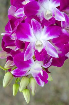 39 Best Orchid Information Images Orchid Supplies Growing