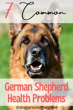 Do you want to give your pup the best and healthiest life possible? Then you must know these 7 common German Shepherd health problems! Dog House Kit, Dog Food Delivery, Facebook Dog, Health Questions, Dog Health Care, Old Dogs, Kit Homes, Dog Houses, New Tricks