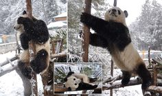 I wish I could play in some snow! These guys are having too much fun :P