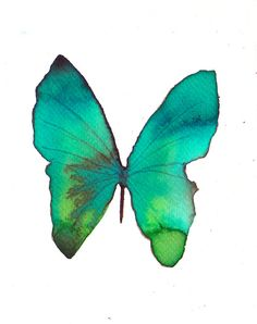 green butterfly. ORIGINAL ART watercolour painting