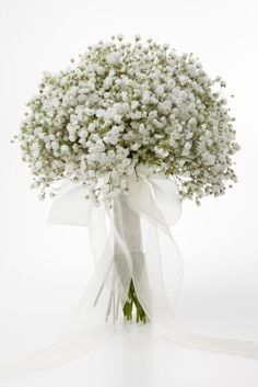 White gypsophila
